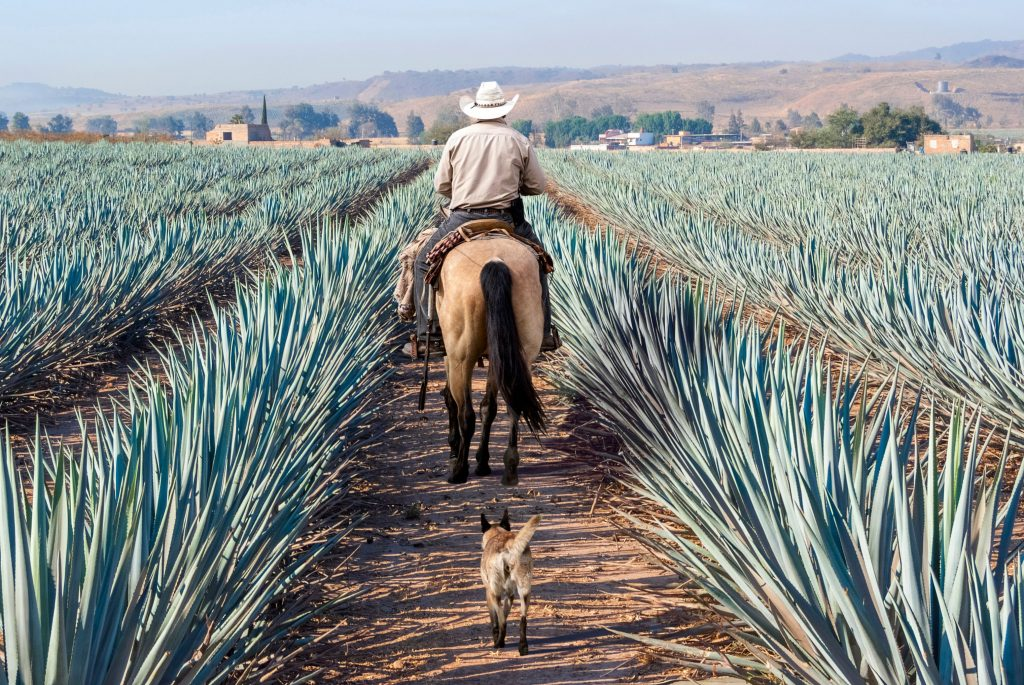 Latitude21Resorts.com And agave farmers.